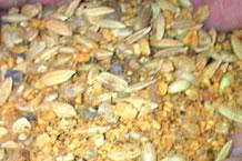 お米の力で元気なタマゴ。米寿の卵(べいじゅのたまご)