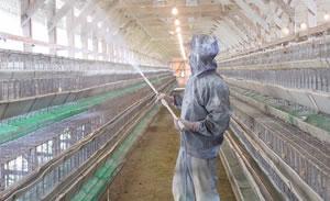 採卵場所であるサルモネラフリー成鶏舎の確保